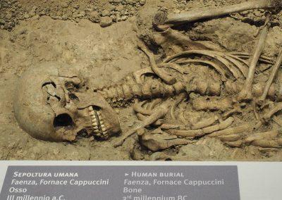 Foto 10:  la vetrina dedicata alla preistoria e agli etruschi - particolari della sepoltura